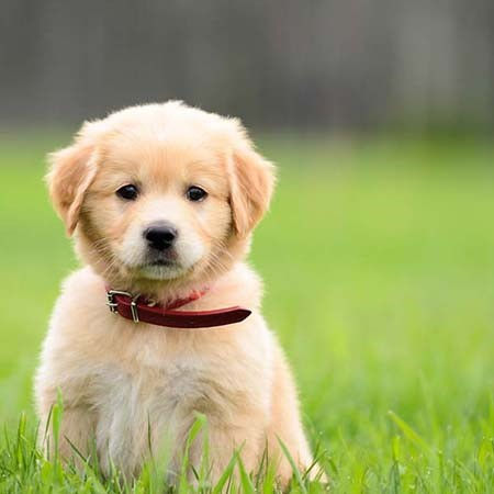Read More about Finding the right puppy for you