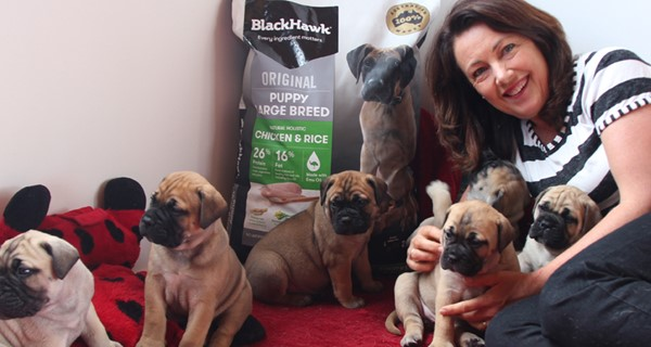 Read More about Masterbreeder Tracey Robinson from Bodacious Bullmastiffs