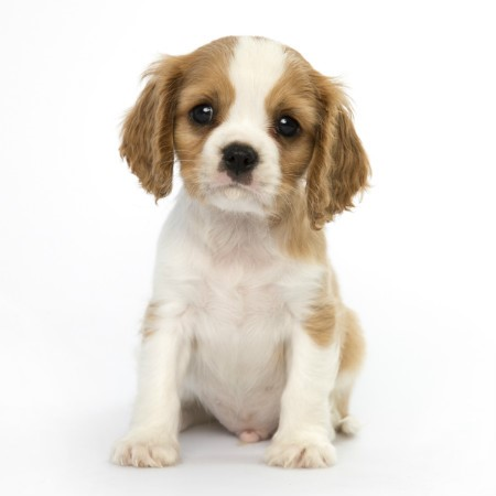 Read More about Bring Home Your New Puppy - First Days