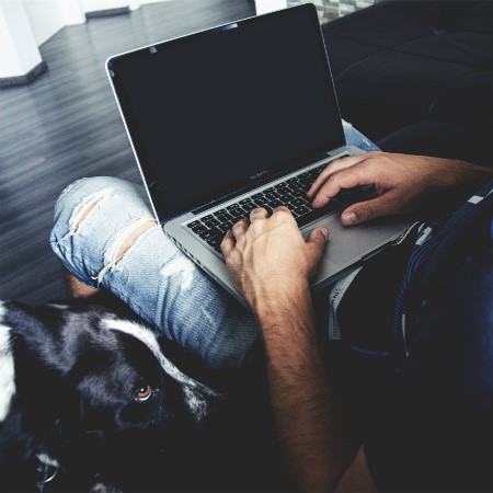 Read More about Working from home with your pet.