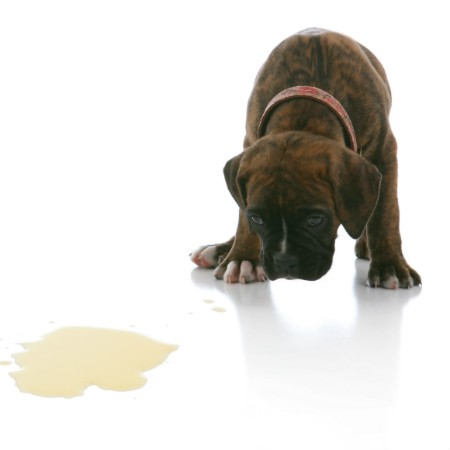 Read More about Toilet Training your Dog