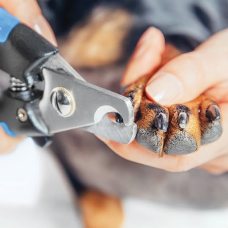 Read More about How to cut dog's nails