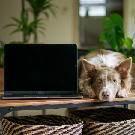 Read More about Integrating your pet into a new work routine