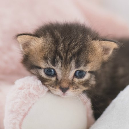 Read More about Kitten Toilet Training