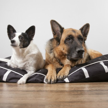 Read More about Introducing a New Puppy or Dog to your Current Dogs