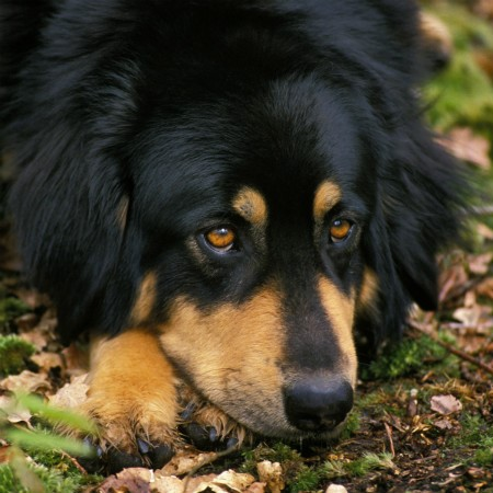 Read More about How to Help a Nervous Dog