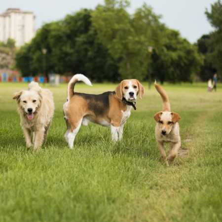 Read More about Taking your Dog to the Dog Park