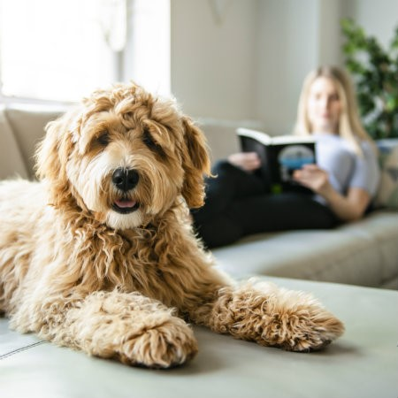 Read More about What is pet house sitting?