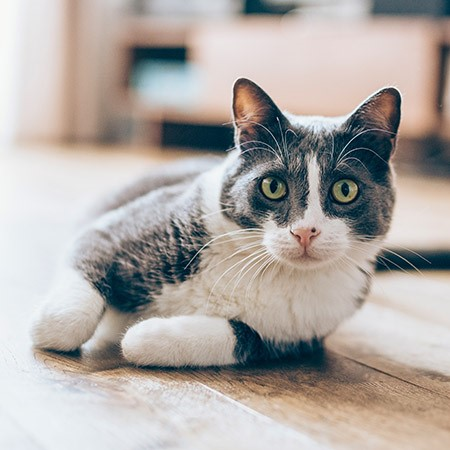 Read More about Is your Cat Healthy?