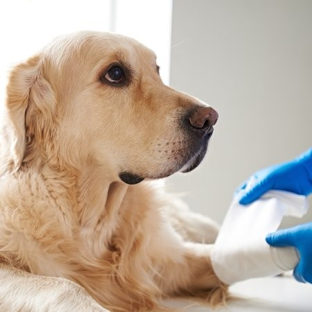 Read More about Pet Insurance for your Dogs