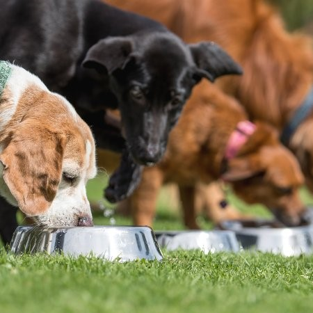 Read More about How an Adult Dog's Nutritional Needs Vary by Size